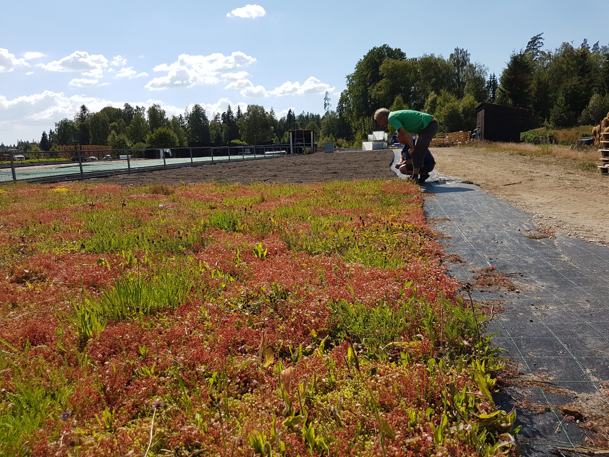 biochar permaculture green roof